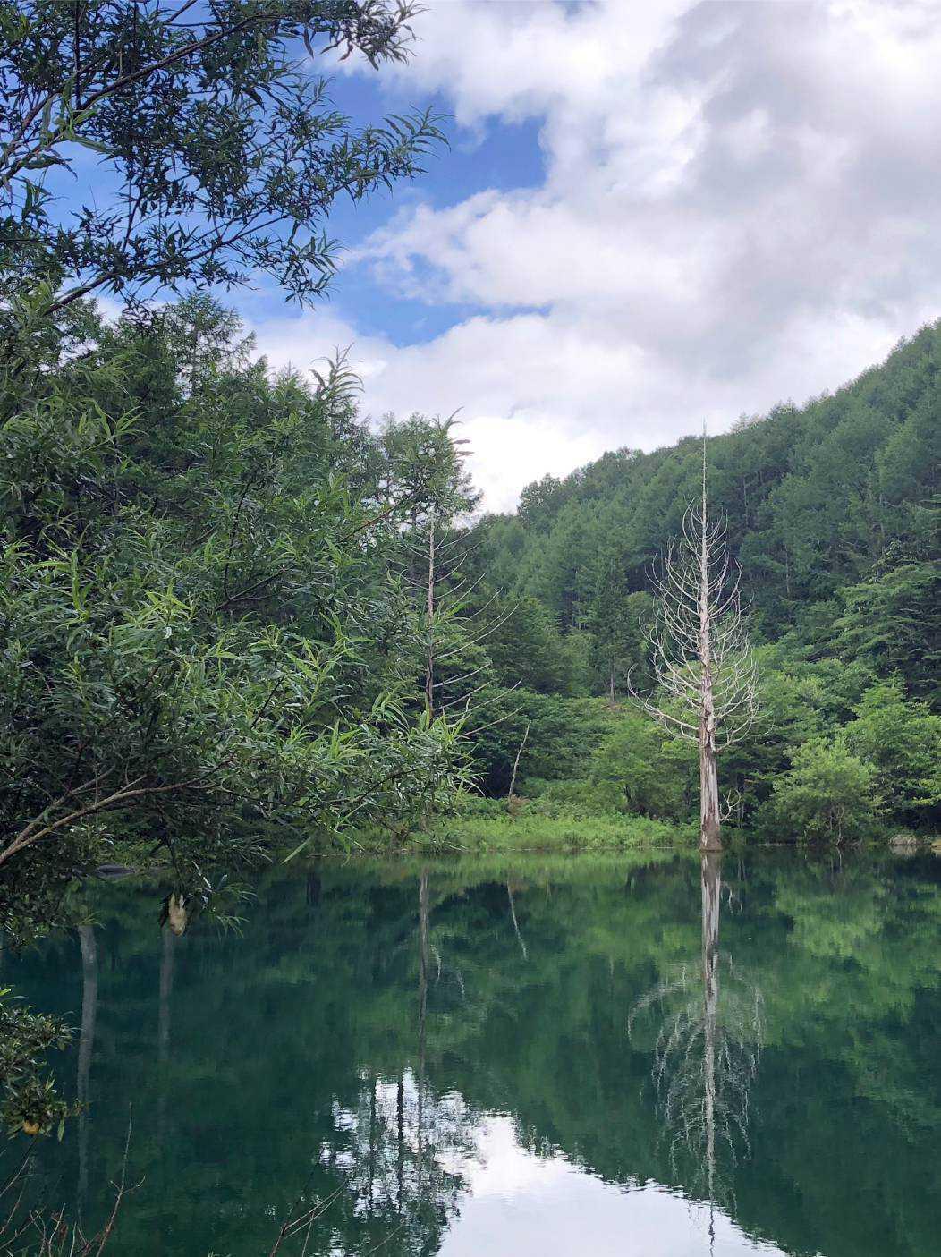 癒しの森 いわなの森