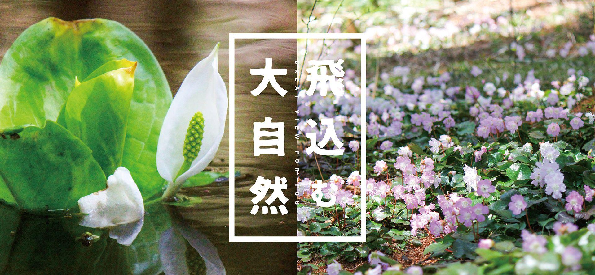 春の富士見台高原