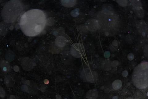 aIMG_0734 (1280x853)